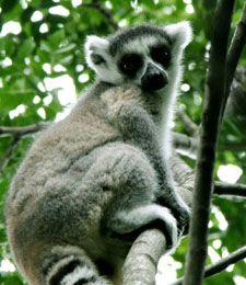 Day trip from Antananarivo | Great Madagascar Tours