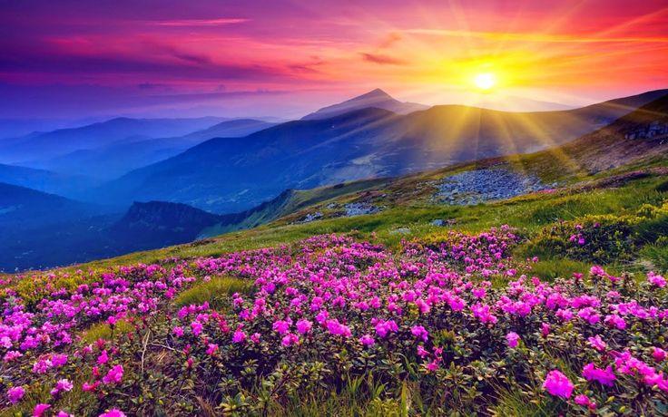 Free Hd Sunset Desktop Screensavers Download Nature Flowers