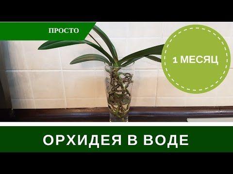 Орхидеи в воде. Гибель,или успешная реанимация? ЭКСПЕРИМЕНТ!НЕ ПОВТОРЯТЬ!!! - YouTube