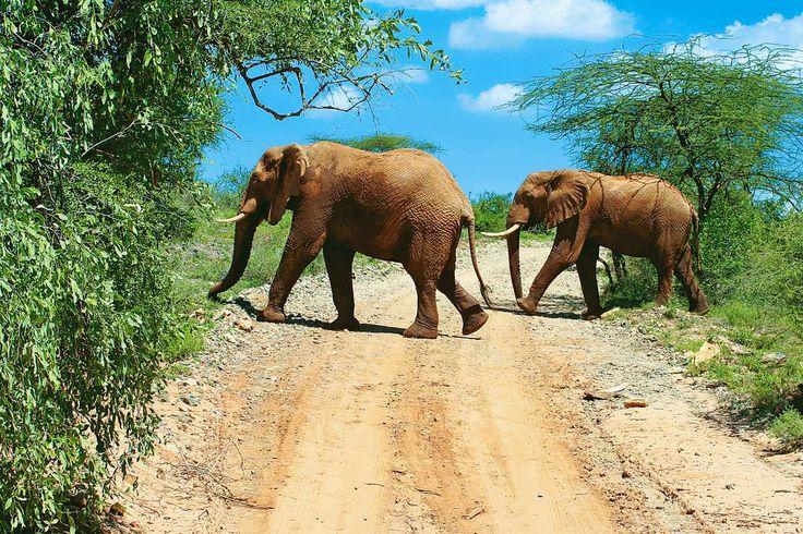 Afryka dzika, Kenia