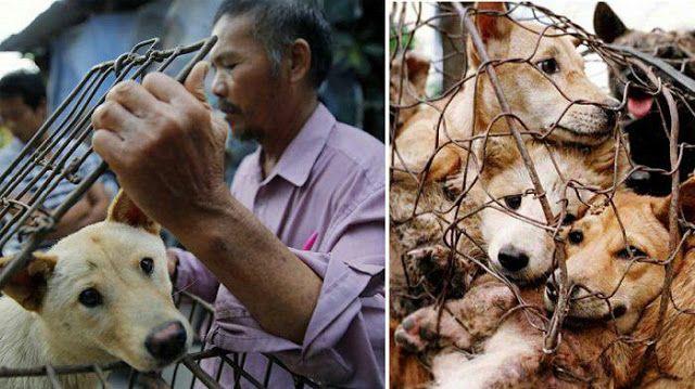 Konsumsi Daging Anjing di Jogjakarta Lebih Besar Dibanding Jakarta? http://ift.tt/2nBTEd6