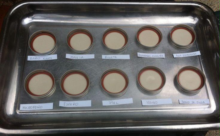 Preparación de cultivo de bacterias