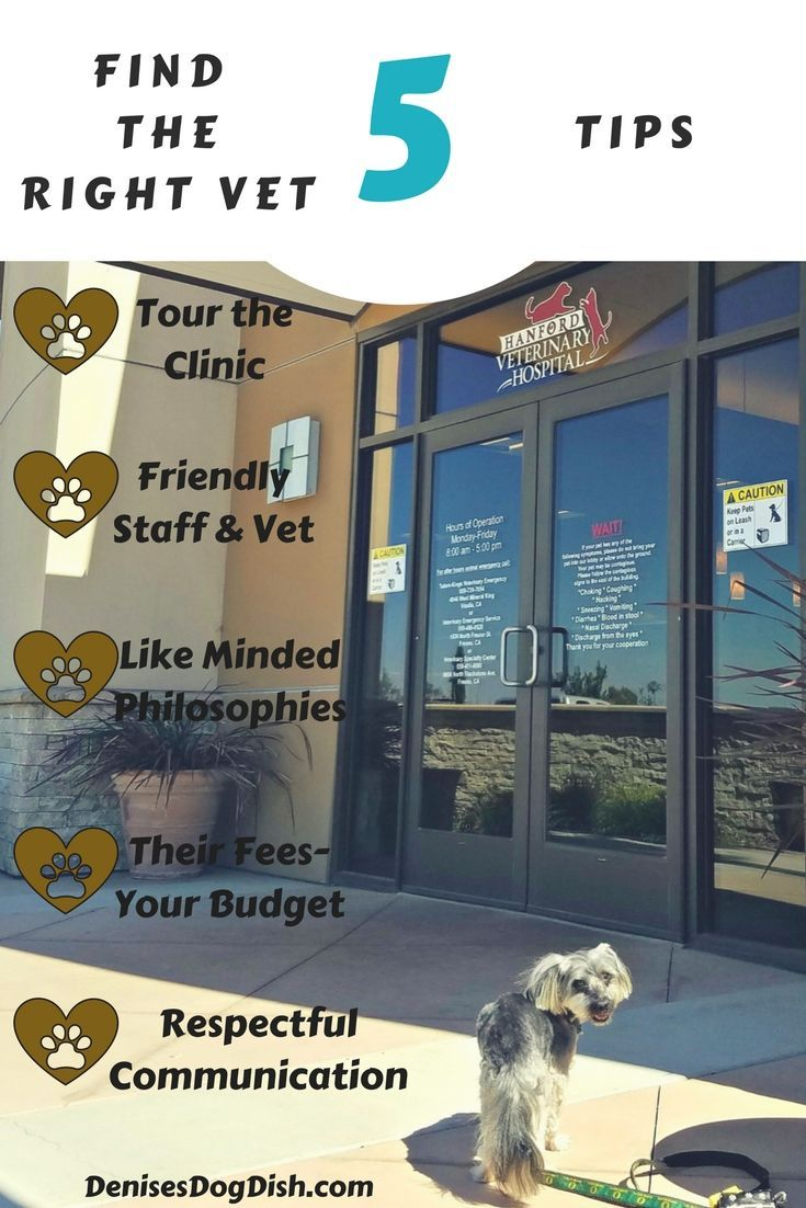 Finding The Right Vet In 2020 Maltese Puppy Care Dog Health Tips Vets