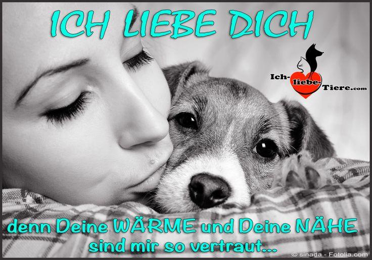 Ich liebe Dich. denn Deine WÄRME und Deine NÄHE sind mir so vertraut... >> http://www.ich-liebe-tiere.com/ <<