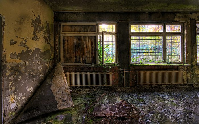 decay - Google Search