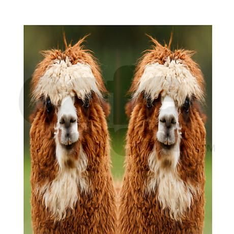 I may just have to have these: alpaca is funny animal Flip Flops on CafePress.com