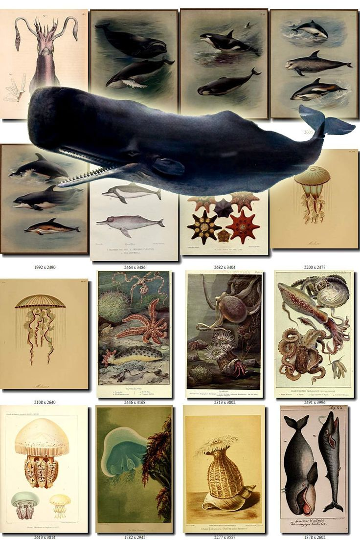 SEA ANIMALS-7 Collection of 140 vintage images Whale Thorburn Dolphin pictures High resolution marine octopus digital download printable by ArtVintages on Etsy
