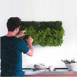 """<p>KAROO presenta un'idea di verde verticale che da ad ogni ambiente un irresistibile """"tocco di verde"""" grazie al semplice sistema modulare adatto per estrni ed interni.<br />L'elemento base misura 40 cm x 40 cm e può contenere 9 piantine racchiuse in un tessuto pacciamante e terriccio speciale per piantagioni verticali, arricchito con concime organico .<br /> i moduli sono ralizzati in materiali plastici reciclati e disponibili nei colori bianco o..."""