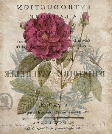 Introduction a la Flore