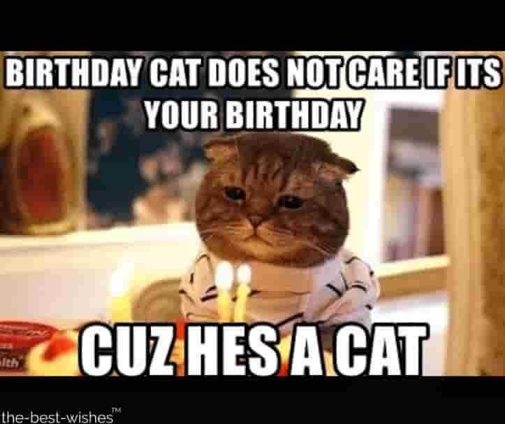 Top 100 Funniest Happy Birthday Memes Most Popular Cat