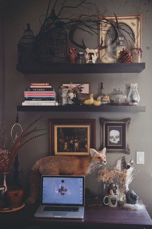 So weird seeing my own room show up on Pinterest! (by Corinne Alexandra) | fox taxidermy, bones, curiosities, bird cages, branch decor