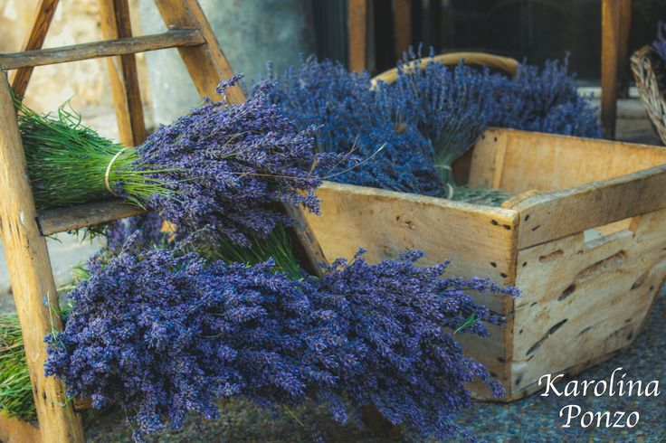Cut lavender in Provence, South of France.