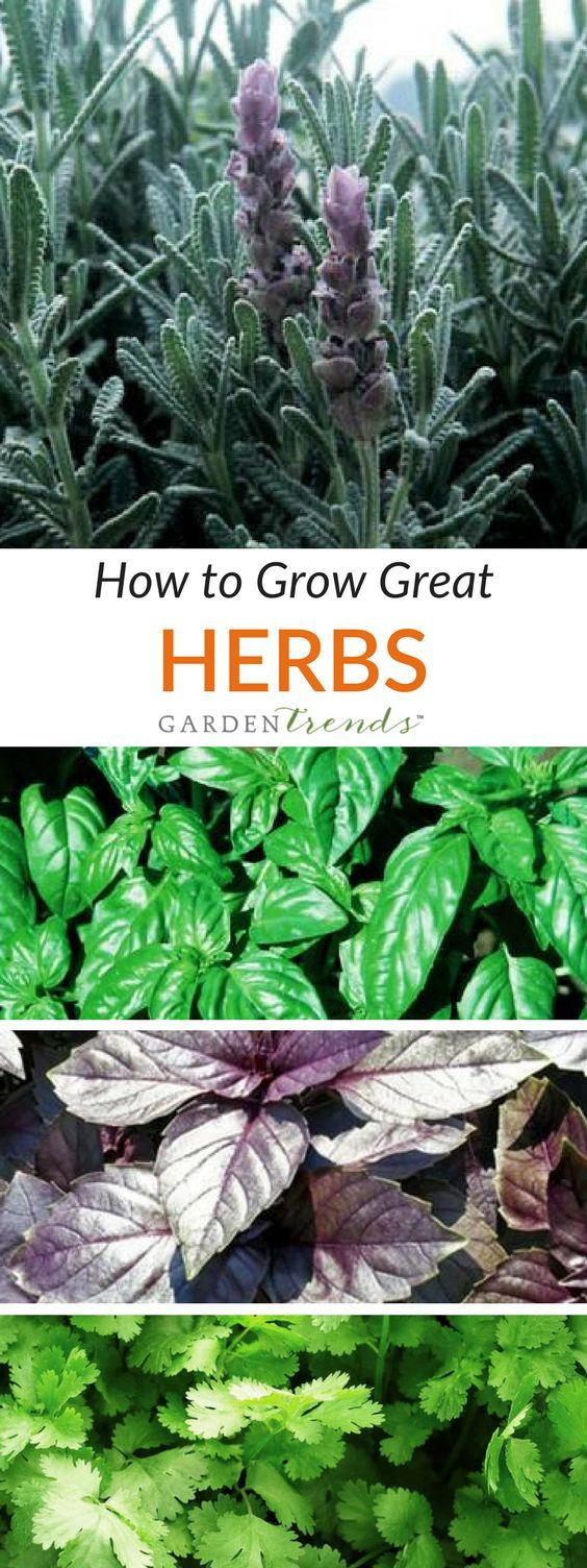 Herbs make an excellent addition to any outdoor garden or patio planter but can also be enjoyed throughout the winter months by harvesting from a windowsill garden. You will find planting instructions on each packet of seed.