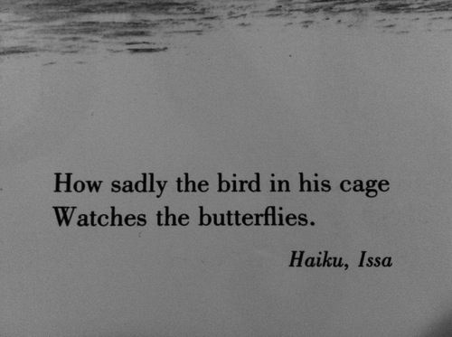 How dadly the bird in his cage Watches the butterflies