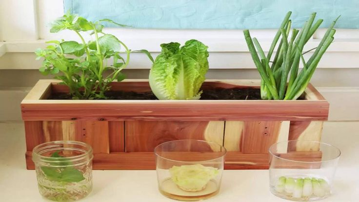 How To Grow Vegetables From Kitchen Scraps - Goodful ... Growing Vegetables From Scraps