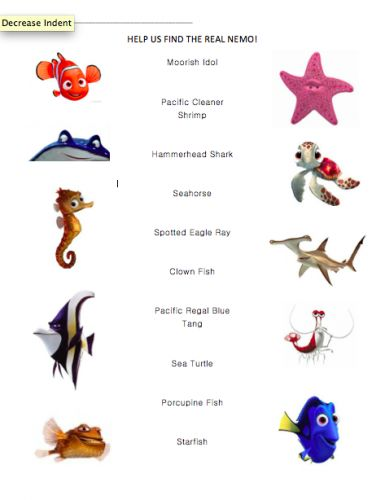 17 best images about finding nemo on pinterest the for All fish names