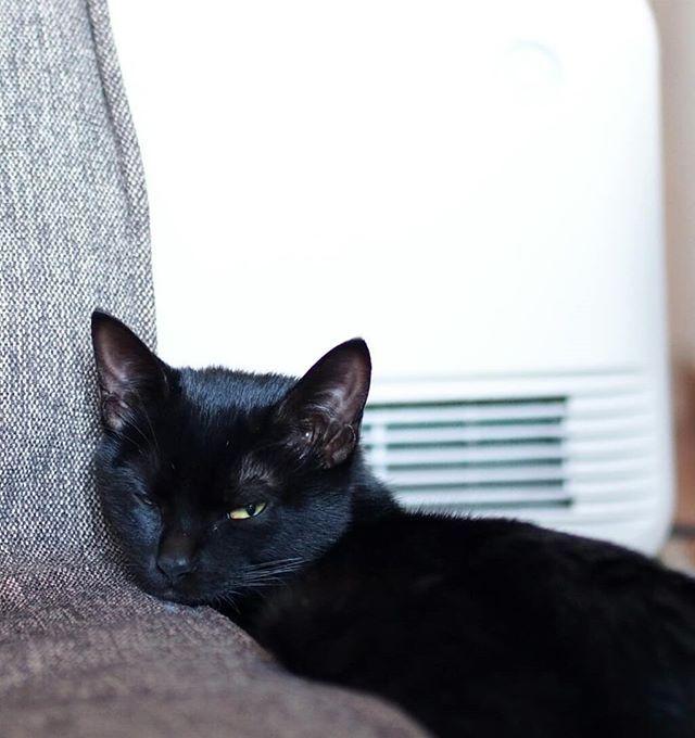 全開稼働中のヒーターの前で ウトウトの おまめ…熱くないのかな?  #ねこ#猫#黒猫#愛猫#おまめ#まめちゃん#猫好き#猫のいる暮らし#眠り猫 #寝子#いんすたきゃっと#きゃっとすたぐらむ  #neko #cat # gatto #blackcat #catlover #sleepingcat #lovecat #myfamily  #instacat #catstagram