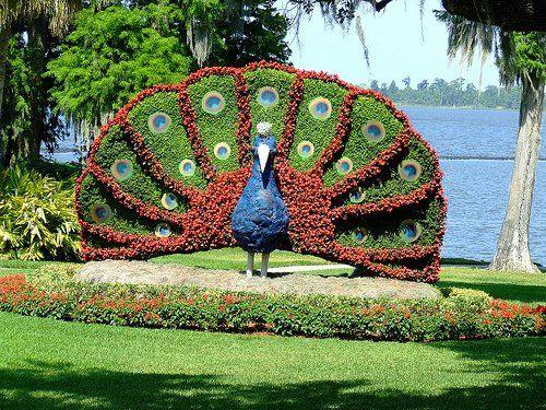 Scultura vegetale | L'arte Topiaria
