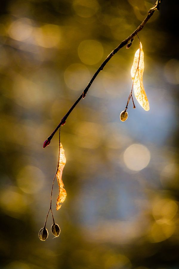 Dream by Robert Rieger - Photo 142240335 - 500px
