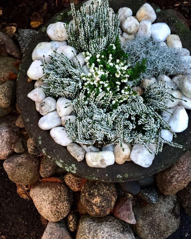 My Garden. Winter Plants.
