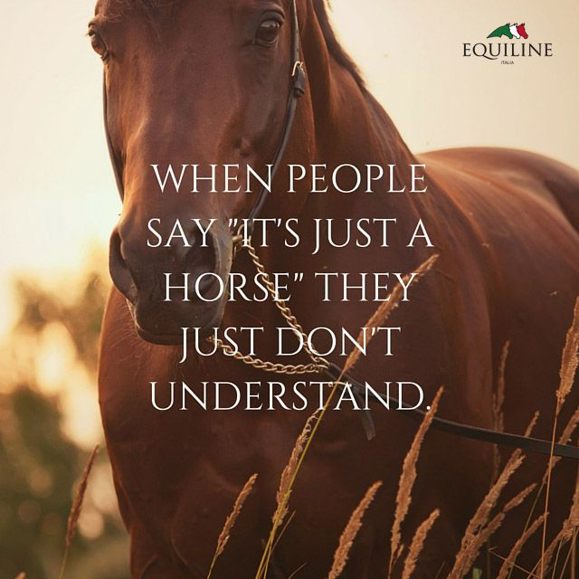 When people say - it's just a horse - they just don't understand. #equestrian #quotes #horse