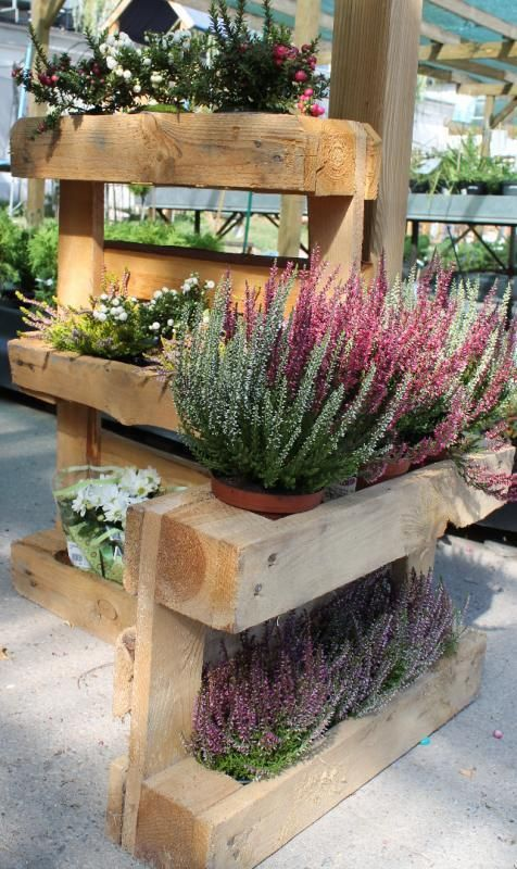 - Wrzosy i inne rośliny jesienne