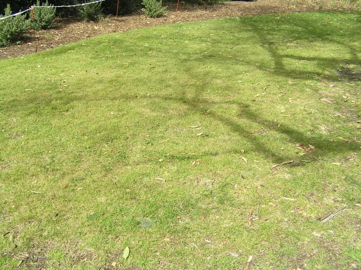 Wallaby and Weeping grass winter lawn mix
