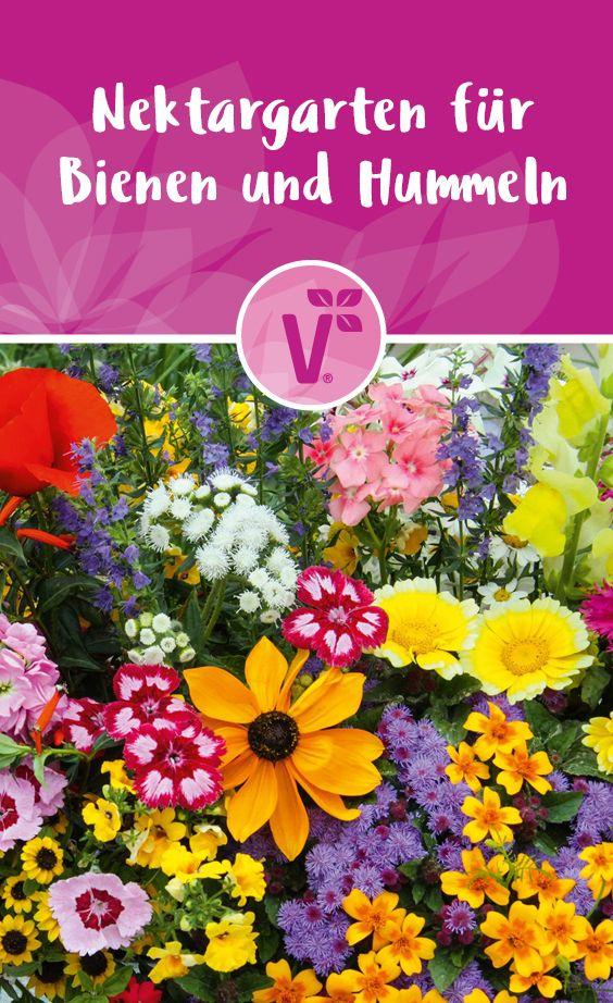 Nektargarten für Bienen und Hummeln / Bienenfreundliche Pflanzen / Bienenfreundlicher Garten