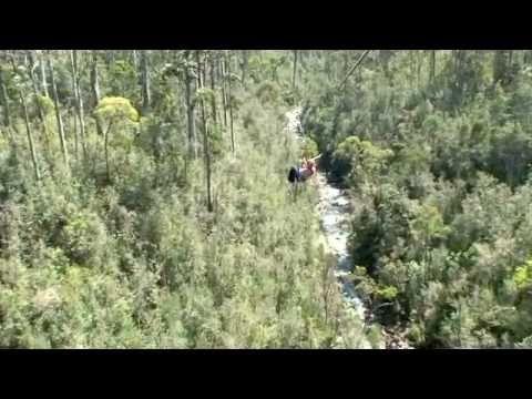 Hollybank Treetops Adventure