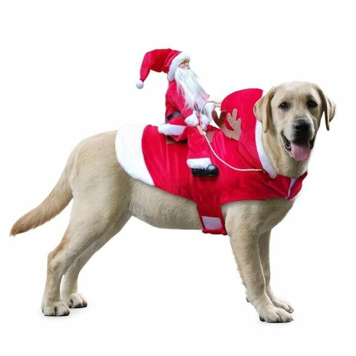 Best Dog Christmas Outfits And Costumes Dog Christmas Clothes