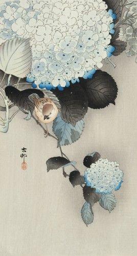 Koson OHARA (1877-1945). Birds amongst hydrangea, Japan