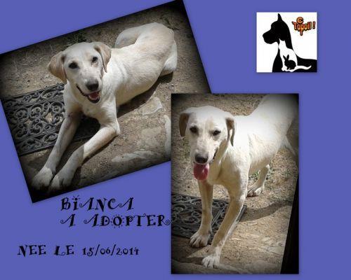 BIANCA Type : Labrador Sexe : Femelle Age : Junior Couleur : Beige Taille : Grand Lieu : Mayenne - 53 (Pays de la Loire)  Refuge : C'Topoil(Mayenne)  Tél : 0658238807         Bianca est une chienne active qui a besoin de se défouler.