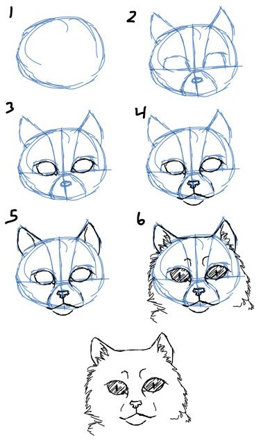 How to Draw Cat Faces/Heads- Front View