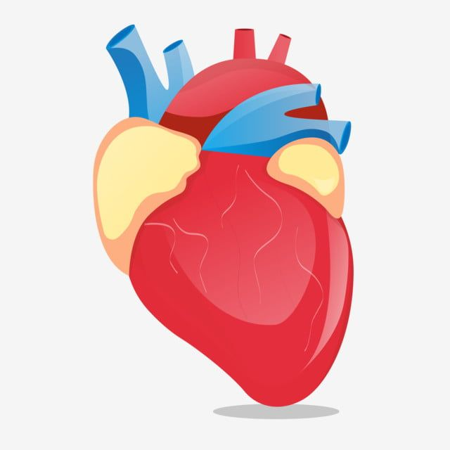 Vector Human Organ Heart Illustration Human Organs Illustration Hand Drawn Organ Illustration Red Heart Png And Vector With Transparent Background For Free D Heart Illustration Illustration How To Draw Hands
