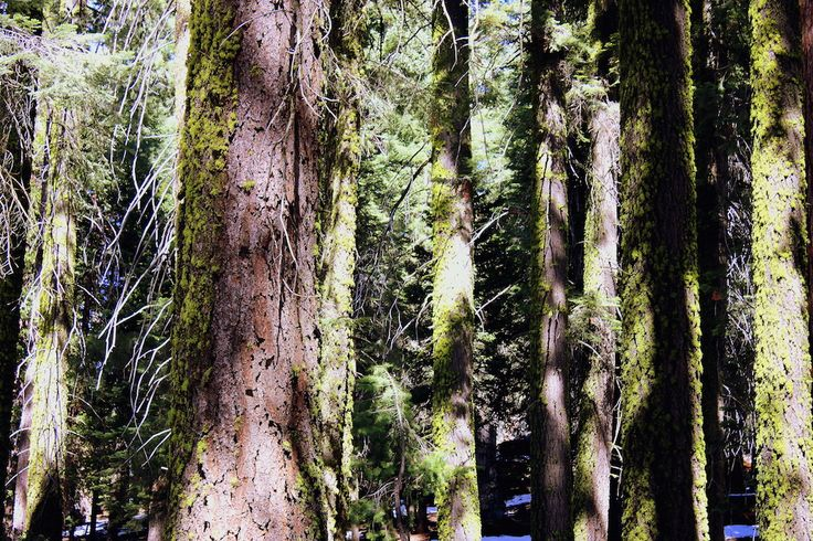 Gotta Love Trees! | Touring John Muir Lodge
