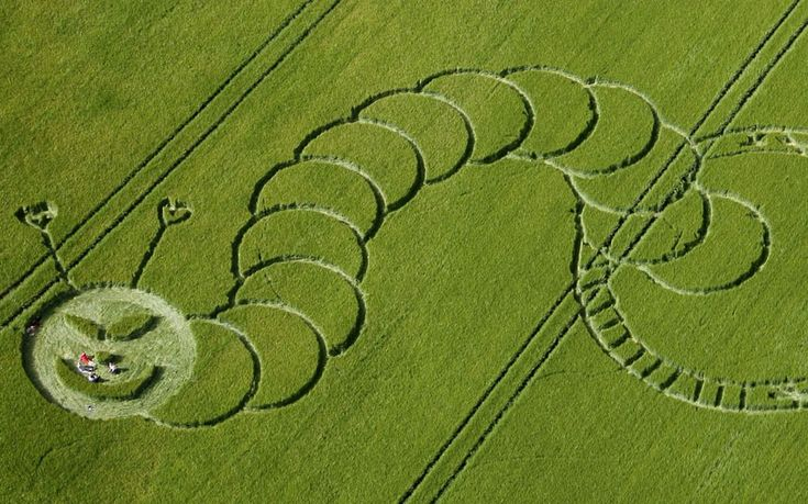 A crop circle design which bears a resemblance to The Very Hungry Caterpillar  has appeared in a field at Boreham Woods, nr Lockeridge, Wiltshire