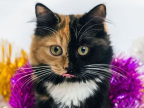 This gorgeous kitten is taking the internet by storm thanks to its TWO FACES.