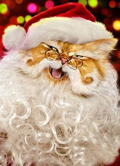 I believe in Santa Claws.