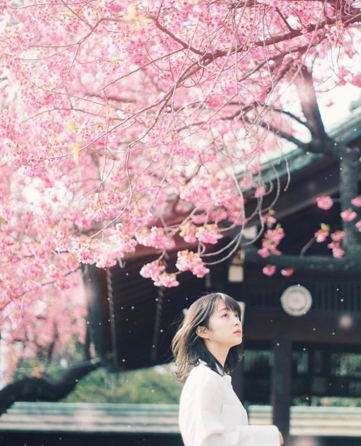 """""""A cherry blossom shower was too beautiful."""" 📷 …"""
