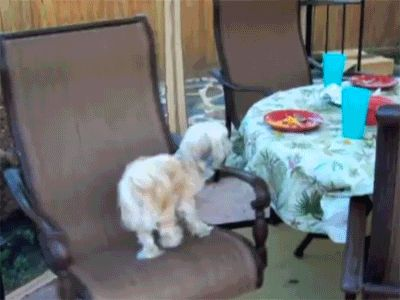 This dog whose endless spinning will never stop being inspiring. | The 47 Absolute Greatest Dog GIFs Of 2013