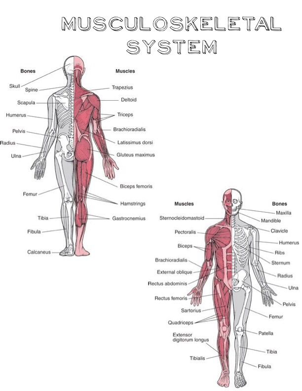 anatomy and physiology notes for nurses pdf