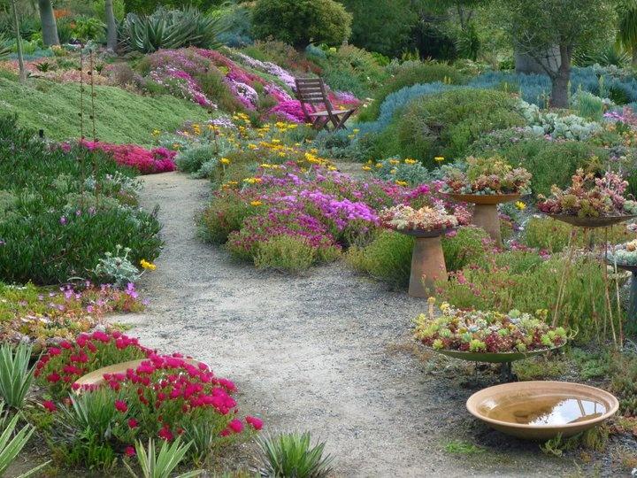 wow - great southwestern garden