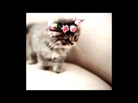 Alaruine see what's new today ?: Top 5 cute cats animals 2017 #005