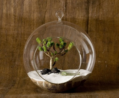 Got a blown glass one at Arhaus Furniture of all places! $9. glass orb terrarium