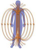Magnétothérapie | Les effets de la magnétothérapie Définition, Principe, Effets des Champs Magnétiques Pulsés