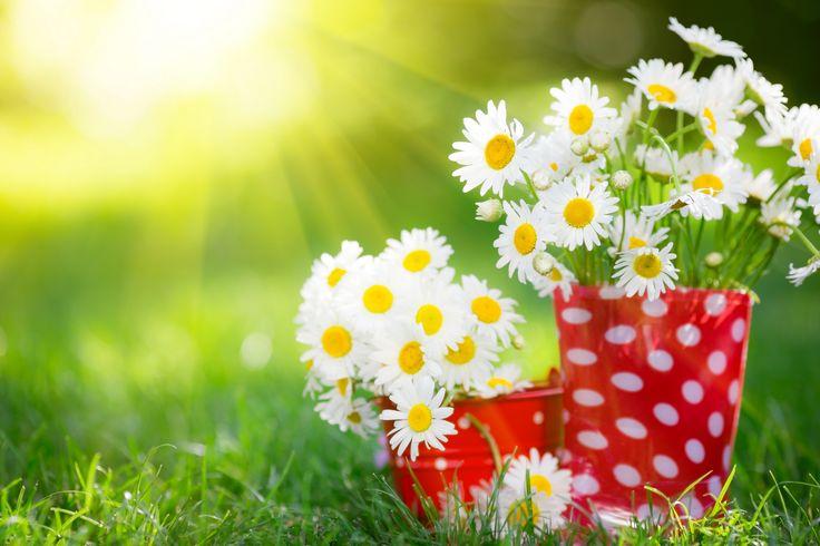 Скачать обои трава, цветы, природа, ромашки, белые, раздел цветы в разрешении 6490x4327