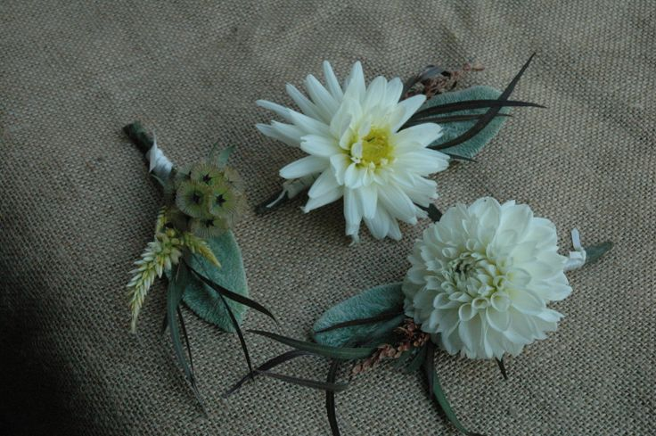 Groomsmen boutonnieres with dahlias, lamb's ear and scabiosa from Turnbull Creek Farm