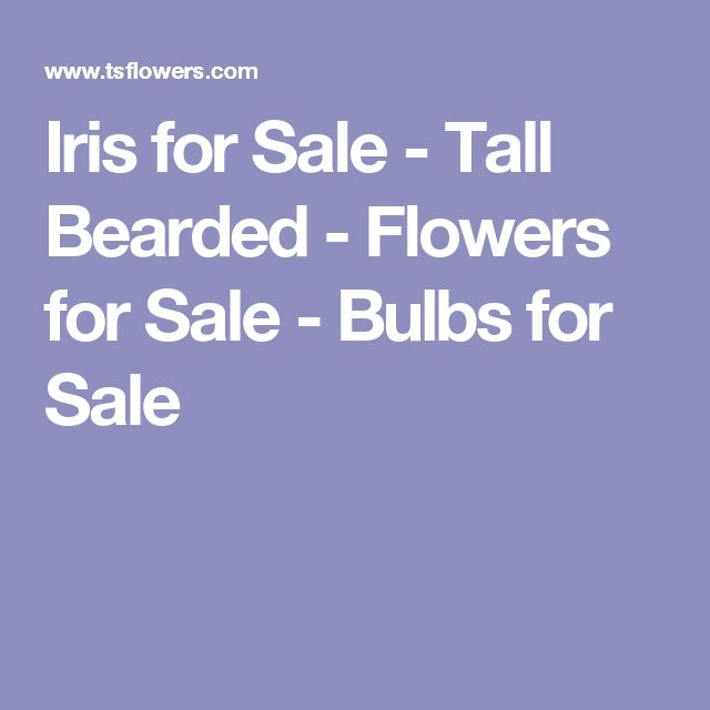 Iris for Sale - Tall Bearded - Flowers for Sale - Bulbs for Sale