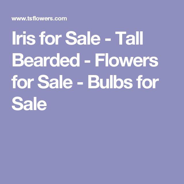 Iris for Sale - Tall Bearded - Flowers for Sale - Bulbs for Sale