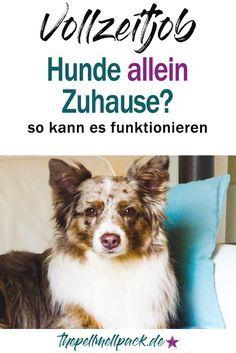 Hund und Job - geht das? Wie lange können Hunde allein zuhause bleiben? So funktioniert es bei uns mit Vollzeitjob und zwei Hunden   Hund   Haltung   Training   thepellmellpack.de